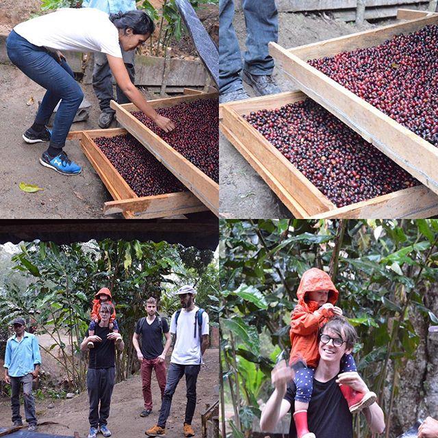 Nu är jag i Ocota, Nicaragua och lär mig mer om kaffe. Igår var vi och kollade in Per Nordbys gård @fincaelarbol #kafferesa #pernordby #materiamajorna #nicaragua