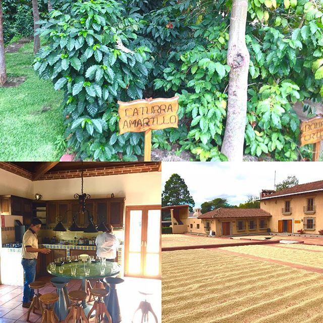 Sista stoppet på vår kafferesa är Guatemala. Mycket gott kaffe och intressant land.
