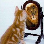 As fontes de inspiração na decisão de lançar um blog