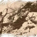 Sugestão de tese para dissecação de cadáver político tucano