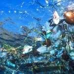 Vida marinha nos oceanos corre sério risco de extinção em massa