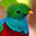 600 espécies de aves tropicais em risco por aquecimento global
