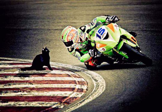 Motociclista e gato na curva