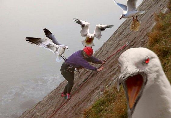 Pássaro ladrão