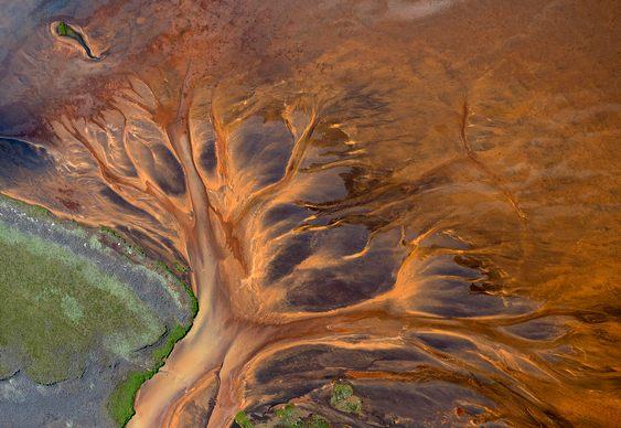 Árvore - Ilusão de ótica