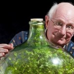 Planta sobrevive 40 anos dentro de garrafa sem água ou ar
