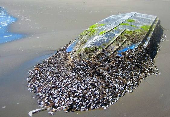 Limpeza de casco de barco
