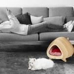 Como fazer uma casinha de gato com a forma de um peixe