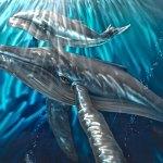 Começa a temporada de reprodução de baleias no litoral brasileiro
