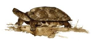 Sakto Turtle