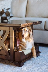 X-Brace Contemporary Coffee Table Pet Bed in Espresso ...