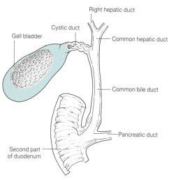 understanding human gallbladder pain gallbladder pain diagram [ 996 x 996 Pixel ]