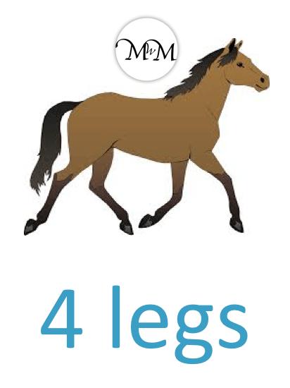 a horse has 4 legs