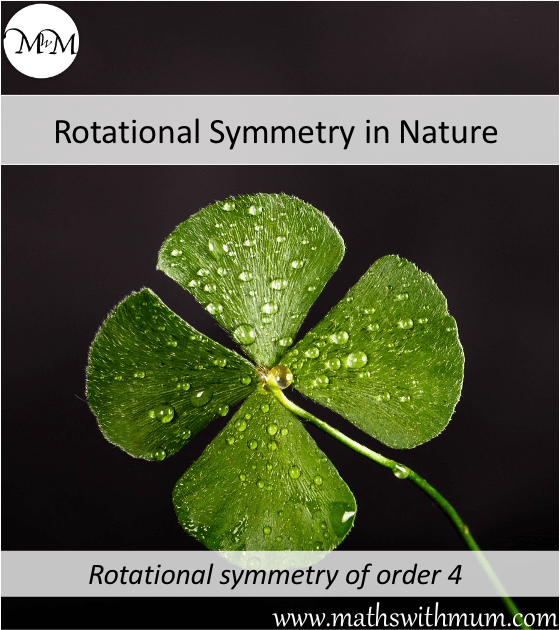 example of rotational symmetry in nature