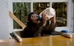 baby Caesar with milk