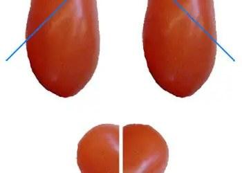 Ντοματάκια καρδούλες