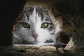 γάτα και ποντίκι