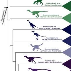 How Do I Draw A Family Tree Diagram Electrical Wiring For New House La Révolution Qui Mené Des Dinosaures Aux Oiseaux - Matière Et