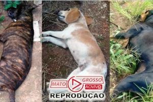 """""""Maníaco dos Pets"""" assusta população de Alta Floresta e mortes em série de animais continua em bairros diferentes 77"""