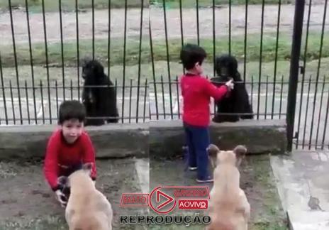 Menino divide ração do cão dele com outro que estava na rua e emociona: video-media-1