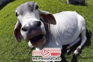 """Doença da """"Vaca louca"""" detectado em Mato Grosso é fato isolado segundo Ministério da Agricultura e Pecuária 76"""