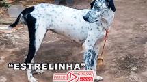 Mais um cachorro envenenado em Alta Floresta, sobe para 45 o número de animais que morreram cruelmente 113