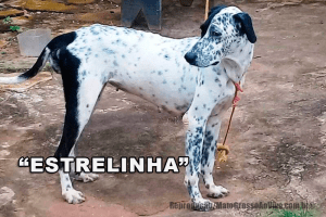 Mais um cachorro envenenado em Alta Floresta, sobe para 45 o número de animais que morreram cruelmente 76