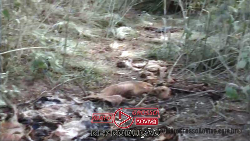 Cemitério de cachorros a beira da estrada e dentro de rio que abastece Alta Floresta, mais de 20 animais foram constatados 68