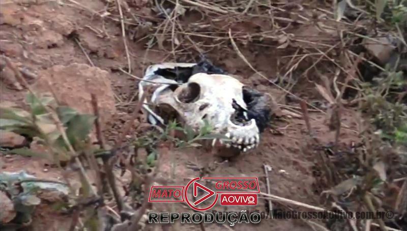 Cemitério de cachorros a beira da estrada e dentro de rio que abastece Alta Floresta, mais de 20 animais foram constatados 69
