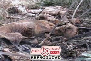 Polícia vai investigar se clínicas veterinárias de Alta Floresta seriam as responsáveis pelo Cemitério de cachorros 63