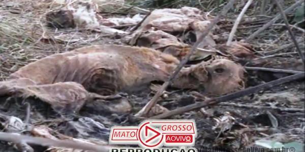 Polícia vai investigar se clínicas veterinárias de Alta Floresta seriam as responsáveis pelo Cemitério de cachorros 32