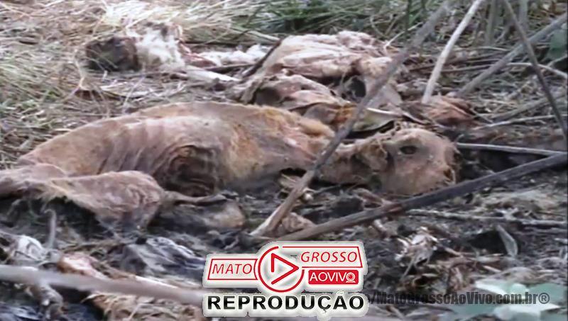 Cemitério de cachorros a beira da estrada e dentro de rio que abastece Alta Floresta, mais de 20 animais foram constatados 72