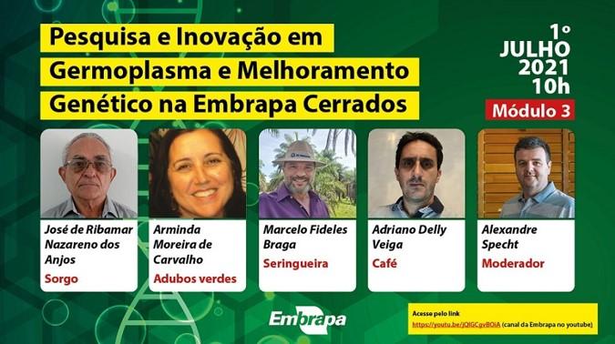 Seminário da Embrapa aborda melhoramento genético e programas de sorgo, adubos verdes, seringueira e café