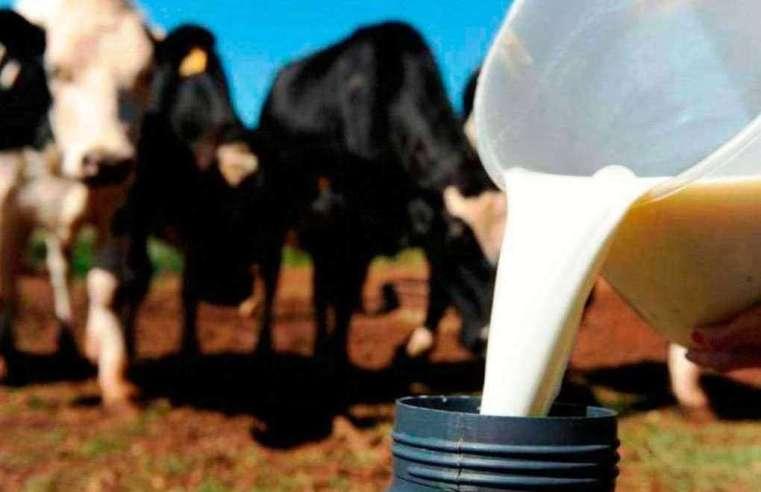 Com produção ociosa em 50%, bacia leiteira de Mato Grosso ganha programa de extensão