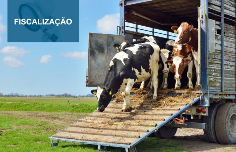 Fiscalização sobre entrada de gado da Bolívia em Mato Grosso será intensificada