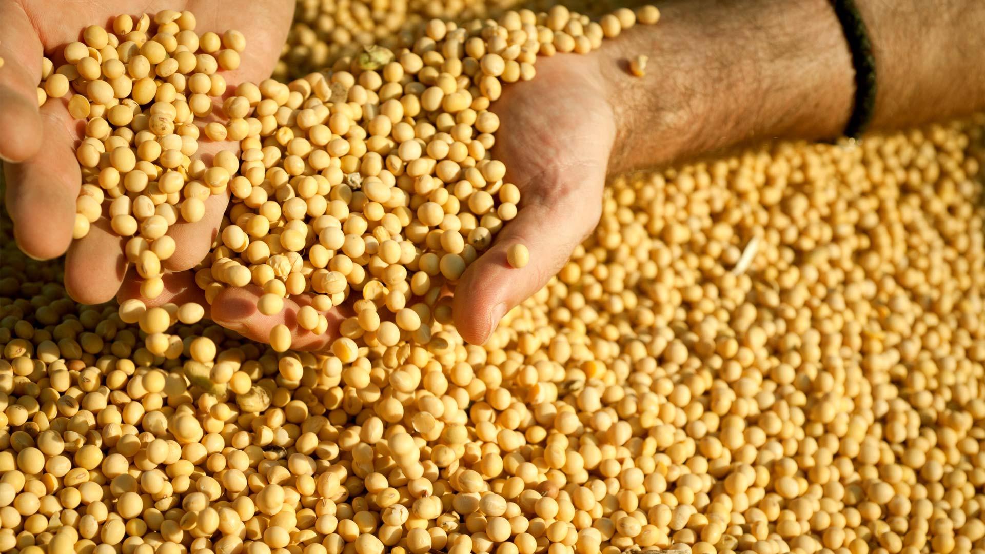 Mesmo com queda na exportação, soja de Mato Grosso vai a R$ 153/saca