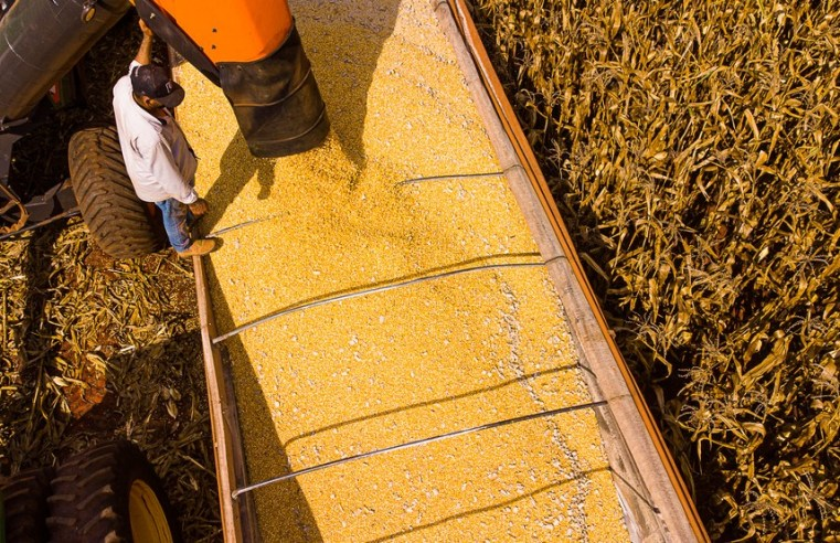 Plantio fora de época por conta da seca leva a queda de 11% na produtividade do milho de MT