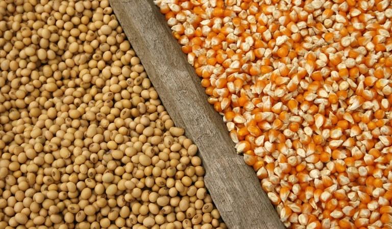 Preço de milho e soja de Mato Grosso sobem após valorização da saca