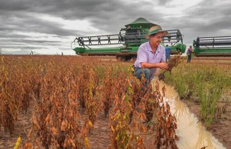Chegada da chuva pode favorecer semeadura e preço da saca de soja