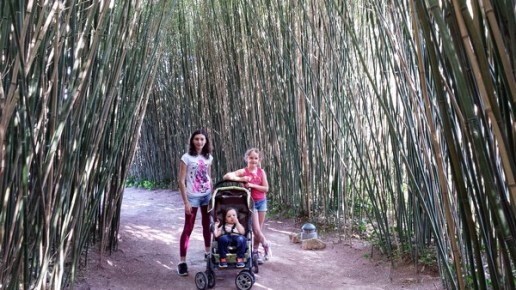 planet exotica bambous