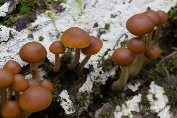 Some tufted mushrooms growing from a log