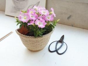 モチーフ用に持ち込まれた鉢植え