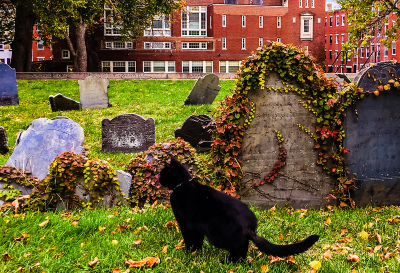 Prince the Black Cat in Copp's Hill Burying Ground