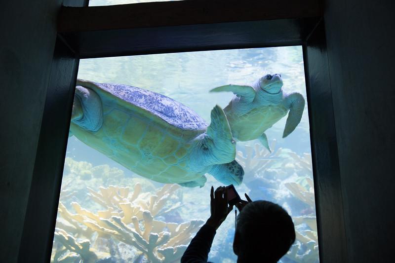 Sea Turtles at the New England Aquarium