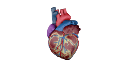 Heart Animation & Texture Render Study