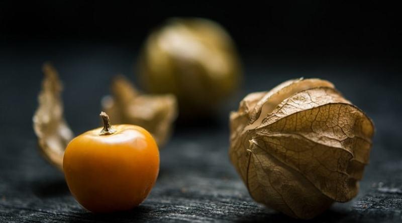 Alchechengi - proprietà, benefici, valori nutrizionali, calorie
