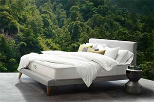 The Zenhaven Mattress In Jungle