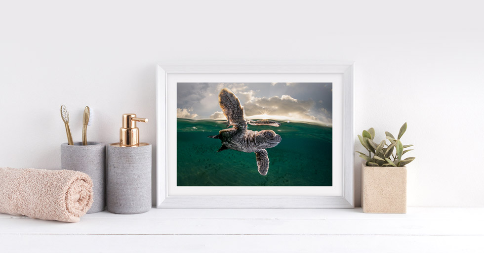 Underwater Photography Workshops