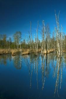 himmelmoor-quickborn-spiegelung