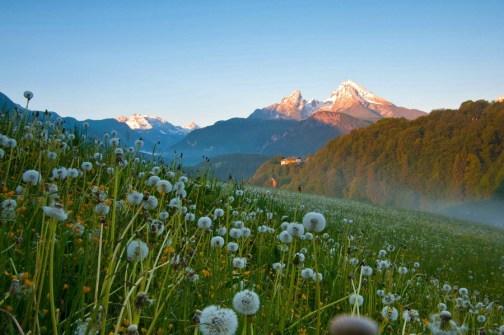 watzmann-sonnenaufgang-wiese-berchtesgadener-land